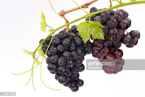 grape cluster - red grape stock photos and pictures