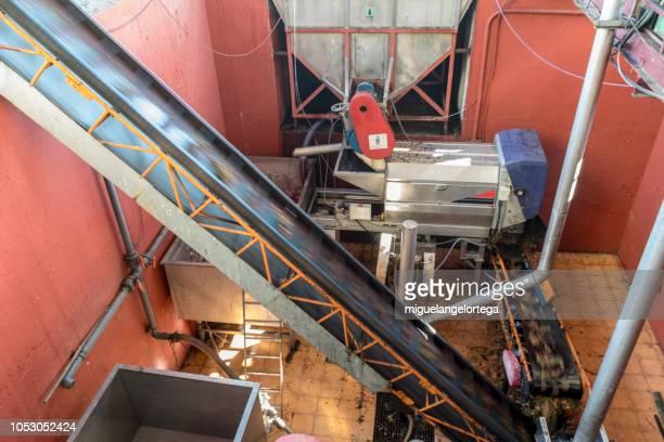 grape conveyor belt after harvest