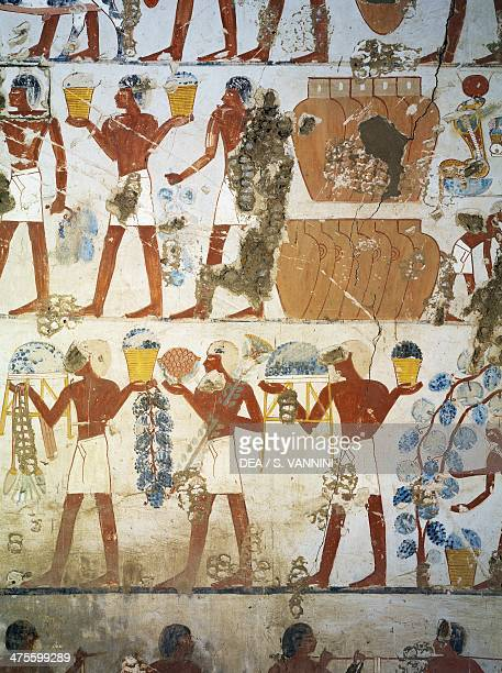 Grape harvest and winemaking fresco Tomb of Menkheper also known as Tomb TT79 dating back to the reign of Thutmose III or Amenhotep II Sheikh Abd...
