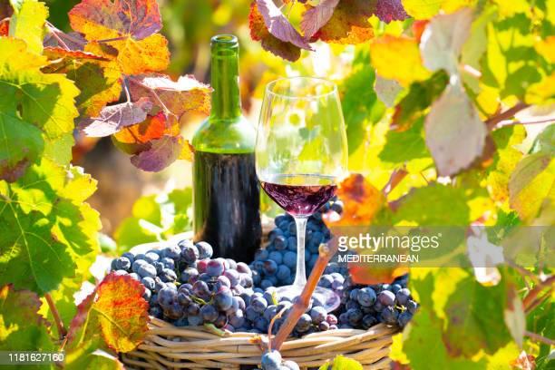 cubeta da colheita da uva com frasco de vinho vermelho e vidro de vinho - cabernet sauvignon grape - fotografias e filmes do acervo