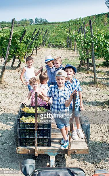 grape harvest. children on a barrow in the vineyard - barrow alaska stock pictures, royalty-free photos & images