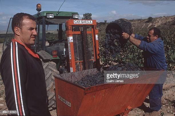 Grape harvest in La Rioja Spain Marques de Murrieta wine cellar