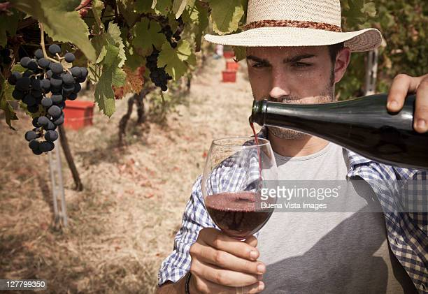 Grape harvest in the Chianti region