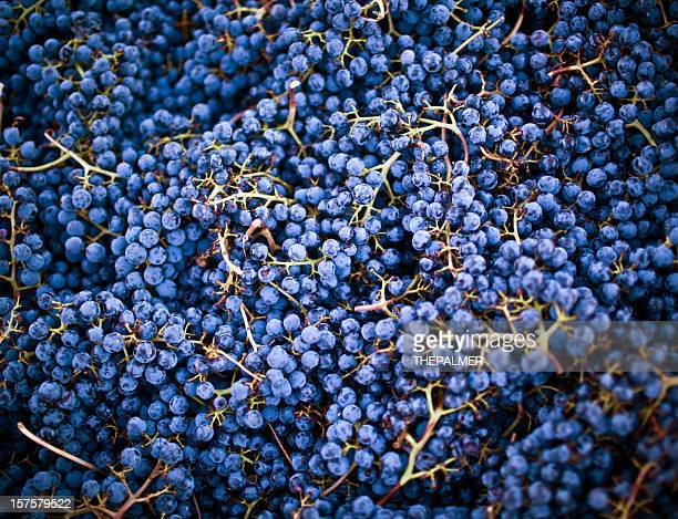 grape harvest, napa valley