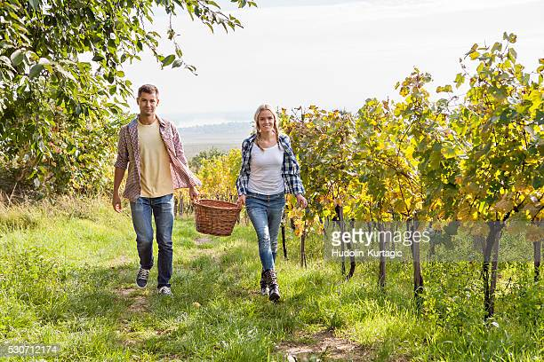 Grape harvest, young couple carrying basket, Slavonia, Croatia