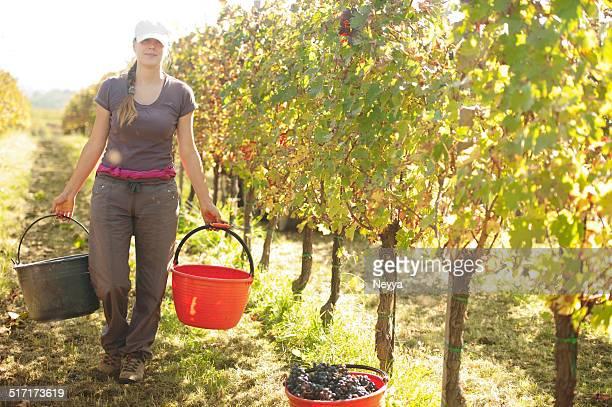 Traube Harvester