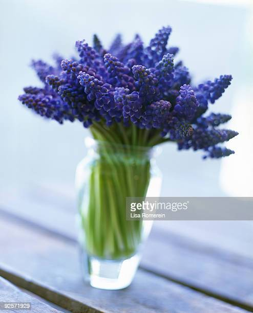 grape hyacinth flowers in vase - muscari armeniacum stock pictures, royalty-free photos & images