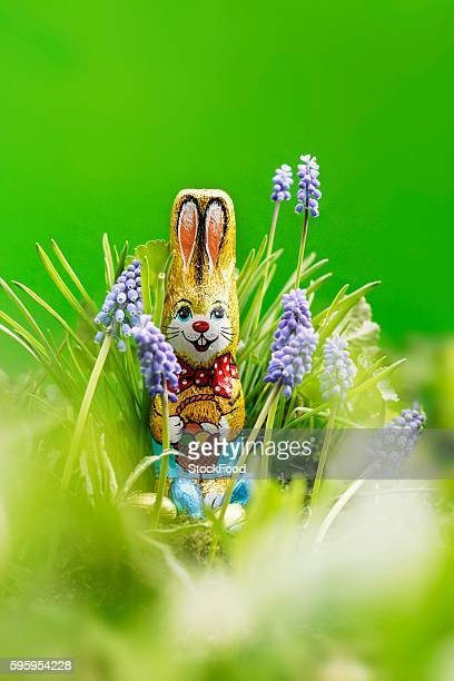 grape hyacinths with chocolate easter bunny & chocolate eggs - muscari armeniacum stock pictures, royalty-free photos & images