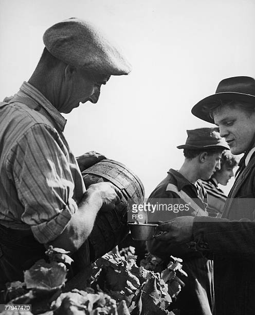 Grape pickers enjoy the fruits of their labour circa 1950