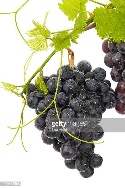 grape - grape leaf stock pictures, royalty-free photos & images