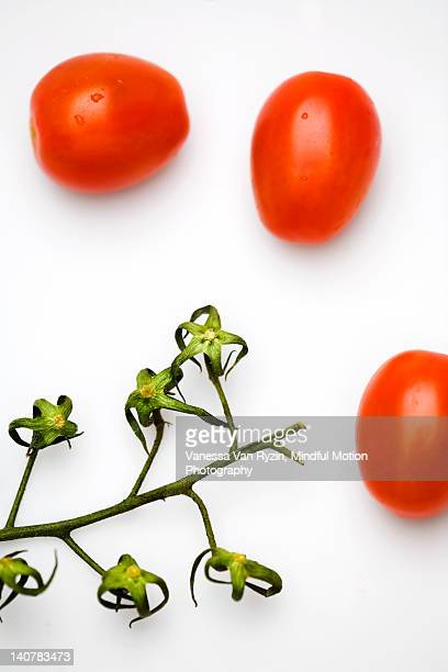 grape tomatoes and vine - vanessa van ryzin 個照片及圖片檔
