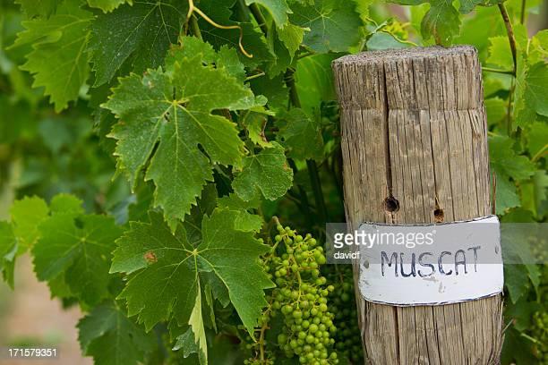Grape Vine Detail