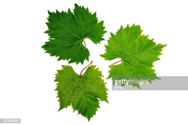 grape vine leaves - vine plant stock photos and pictures