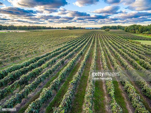 grape vine lines - erie pennsylvania stock pictures, royalty-free photos & images