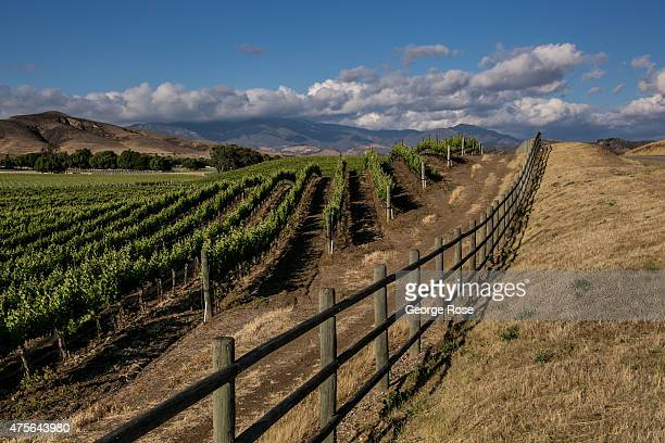 Grape vineyards in Happy Canyon are viewed on May 15 near Santa Ynez California Because of its close proximity to Southern California and Los Angeles...
