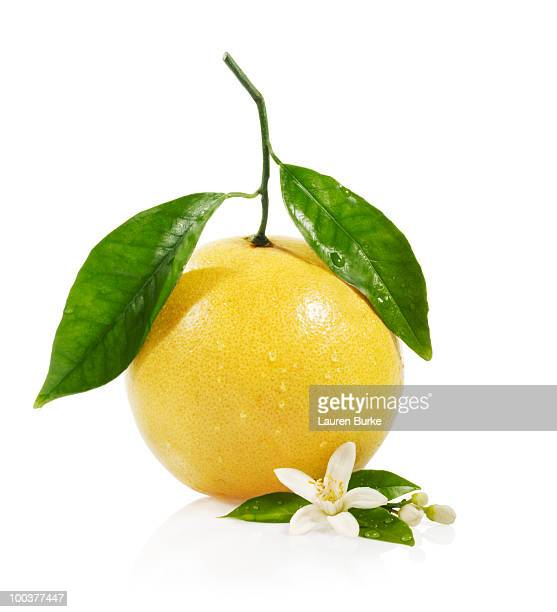 Grapefruit with Blossom on White Background