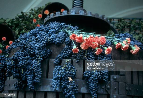 Grapes and carnations in La Rioja