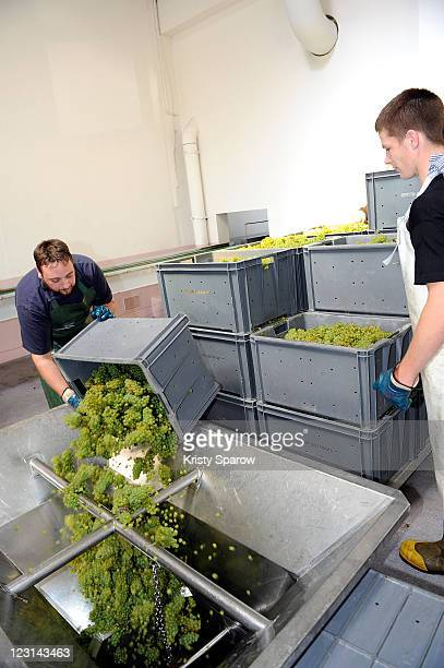 Grapes are processed at the Nicolas Feuillatte champagne processing facility on August 31 2011 in Epernay France