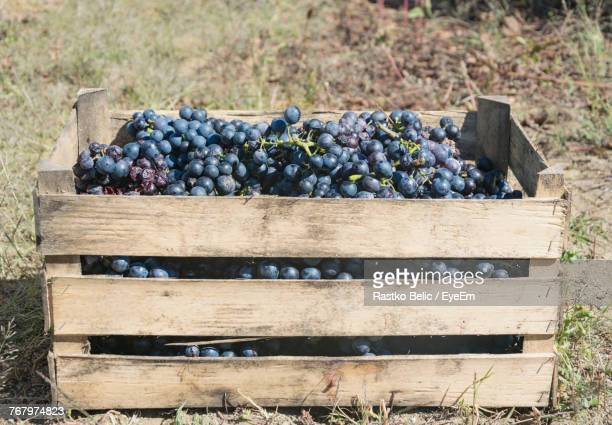 Grapes In Crate On Field