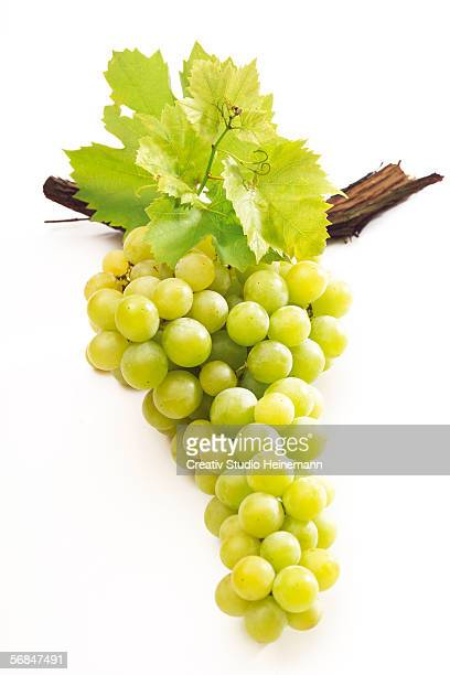 138 Grape Leaves White Background Photos And Premium High Res Pictures Getty Images