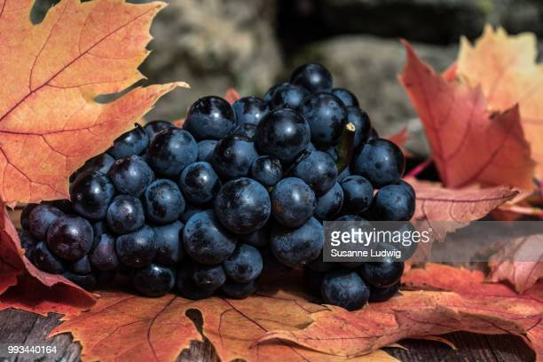 grapes - susanne ludwig stock pictures, royalty-free photos & images