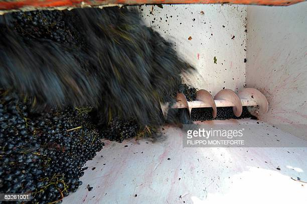 Grapesare being processed during the harvest iin Val D'Orcia, in the Tuscany region, near Pienza on October 10, 2008. The Val D'Orcia, which extends...