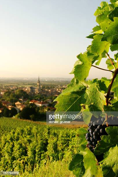 grapevine with wine grapes overlooking french village - rhone stock pictures, royalty-free photos & images