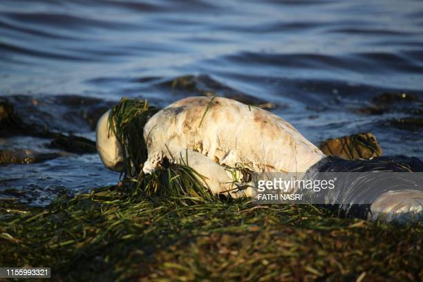 Graphic content / The body of an African migrant lies on the shore of the Mediterranean near the eastern Tunisian city of Zarzis on July 16 2019...
