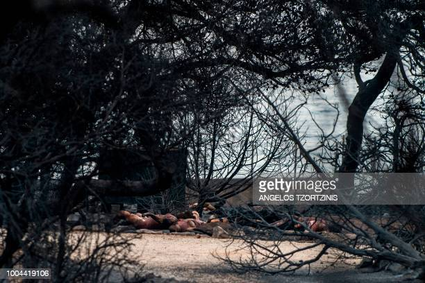 Graphic content / This photo taken on July 24 2018 show dead people following a wildfire at the village of Mati near Athens on July 24 2018 Fifty...