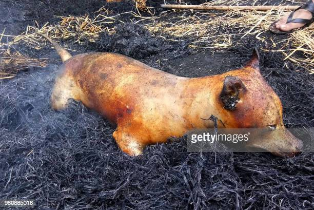 Graphic content / This photo taken on June 21 2018 shows the carcass of a dog being roasted in straw in Yulin in China's southern Guangxi region...