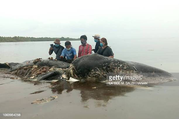 Graphic content / This picture taken on November 19 2018 shows a dead sperm whale that washed ashore that had nearly six kilograms of plastic waste...
