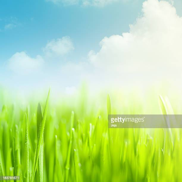 Graphic illustration of a field of green grass and blue sky