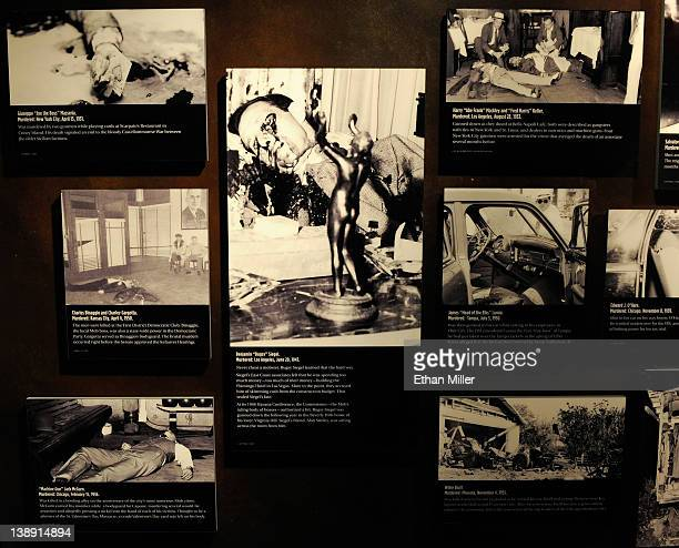 Graphic images of mobassociated murders including the 1947 murder of Benjamin Bugsy Siegel are displayed at The Mob Museum February 13 2012 in Las...