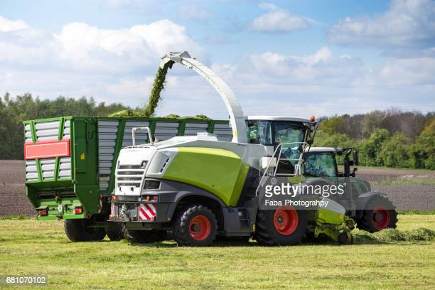 Gras harvest