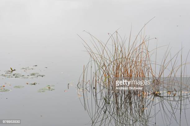 gras im wasser - gras stock pictures, royalty-free photos & images