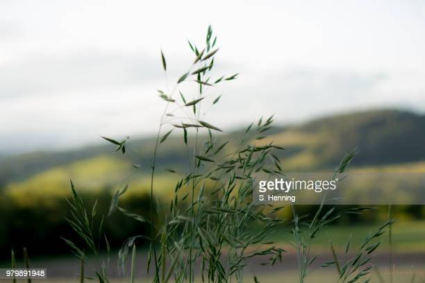 gras - gras stock pictures, royalty-free photos & images