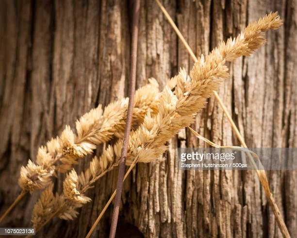 gras und holz - gras stock pictures, royalty-free photos & images