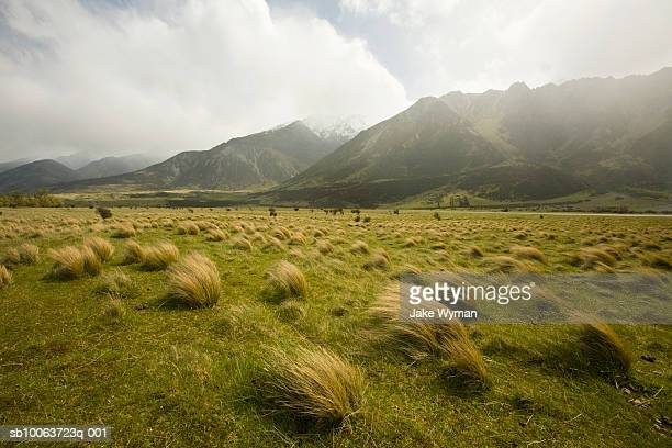 Grass and mountain