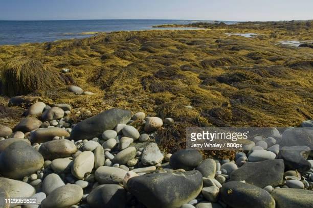 Grass and pebbles on seashore