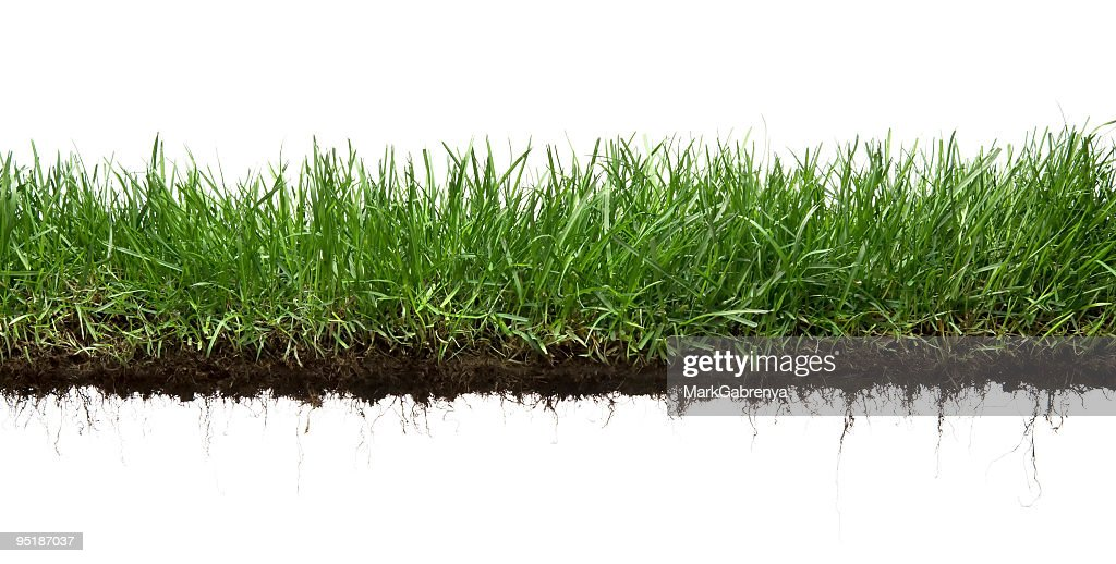 Grama e roots isolado : Foto de stock