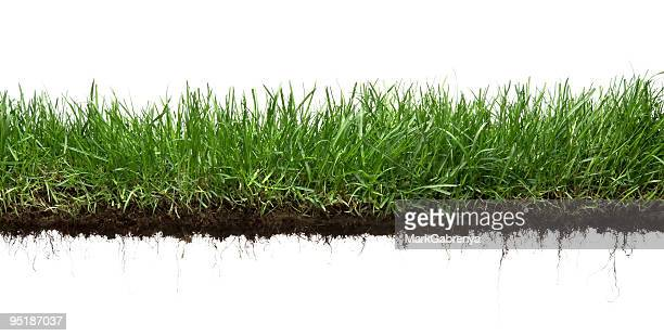 grass and roots isolated - cross section stock pictures, royalty-free photos & images