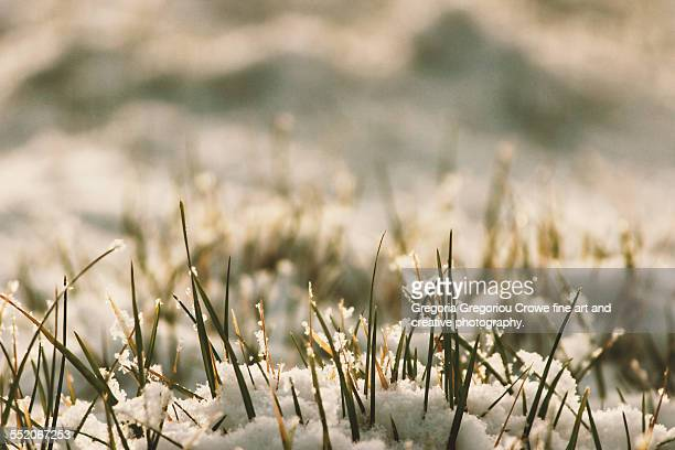 grass and snow - gregoria gregoriou crowe fine art and creative photography stock photos and pictures