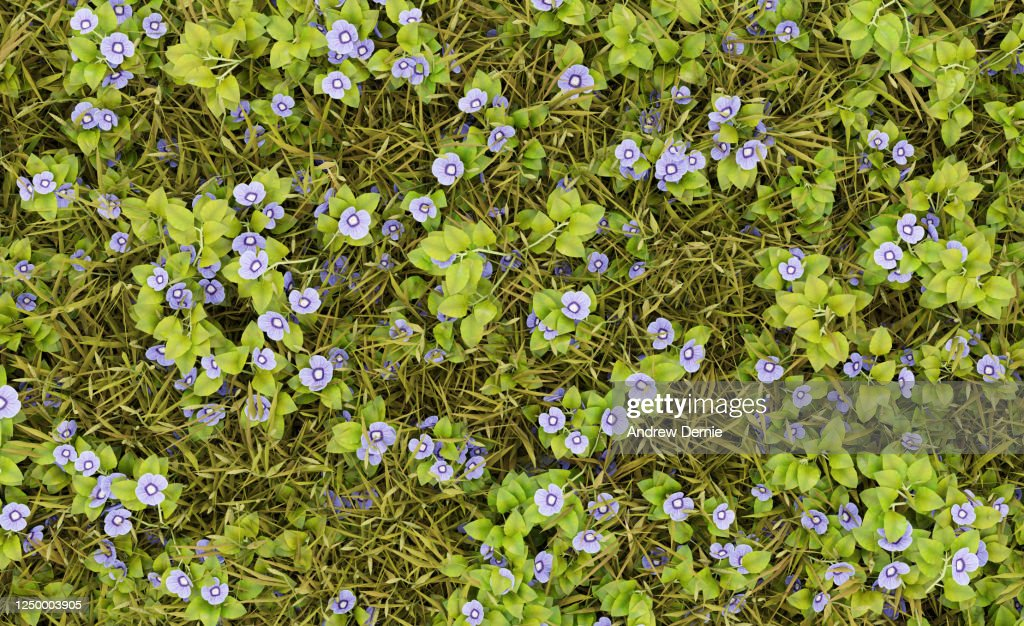 Grass and Speedwell viewed from the above, full frame : Stock Photo