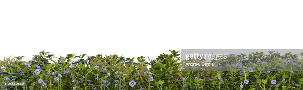 Grass and Speedwell viewed from the side, isolated on a white background 3D Render : Stock Photo