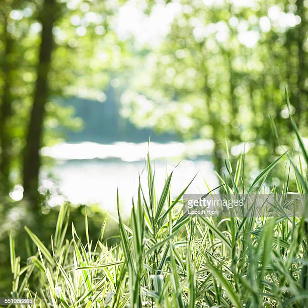 Grass and trees framing river in background