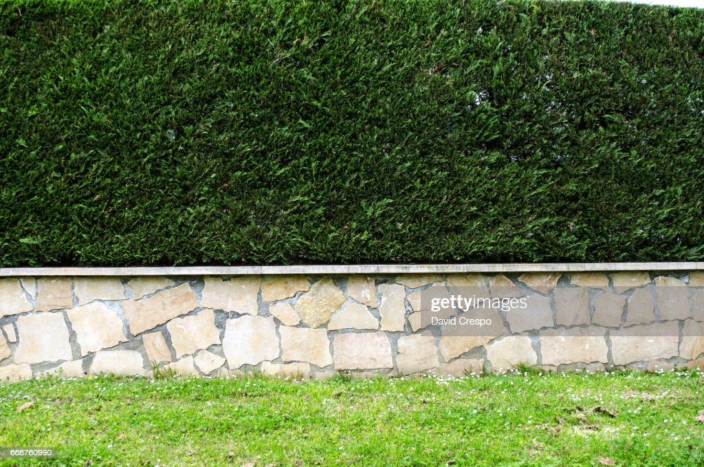 Grass and wall : Stock Photo