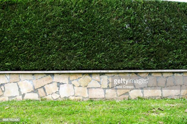 grass and wall - bush stock pictures, royalty-free photos & images