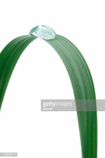 Grass Arch