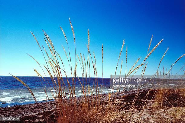 Grass at coast