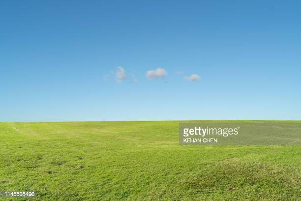 grass background against sky - grama - fotografias e filmes do acervo